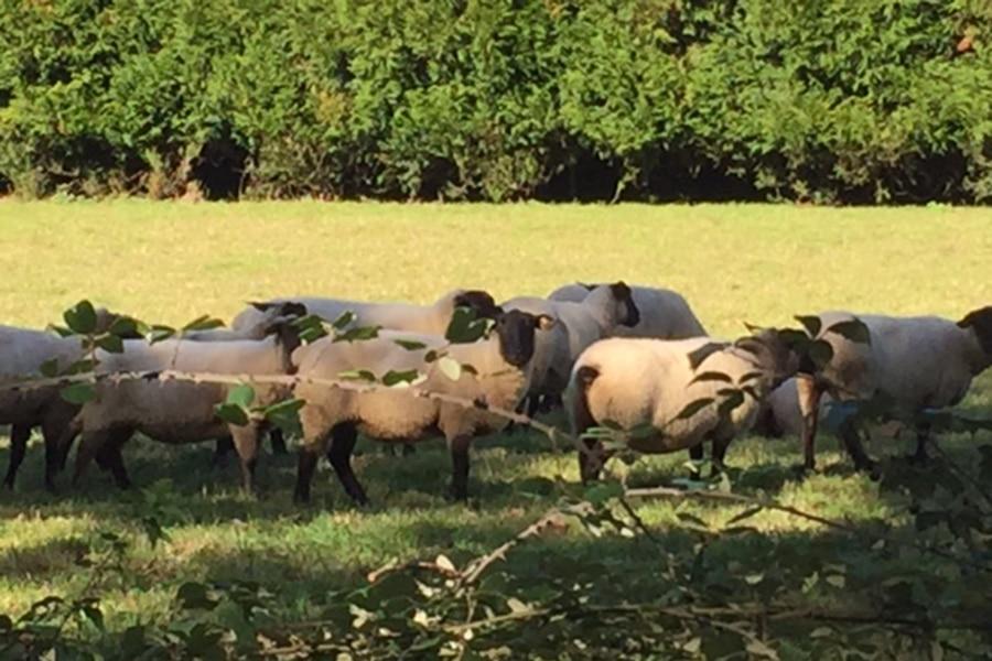 moutons-gite-indre